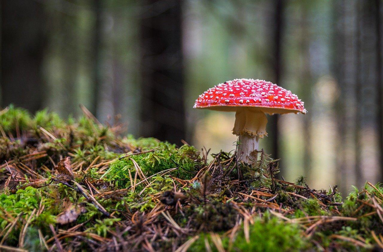 mushroom 3051519_1280