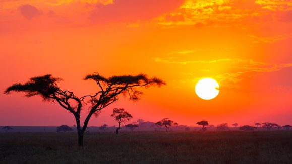 Savanna Sunrise and Acacia Tree in Tanzania Africa