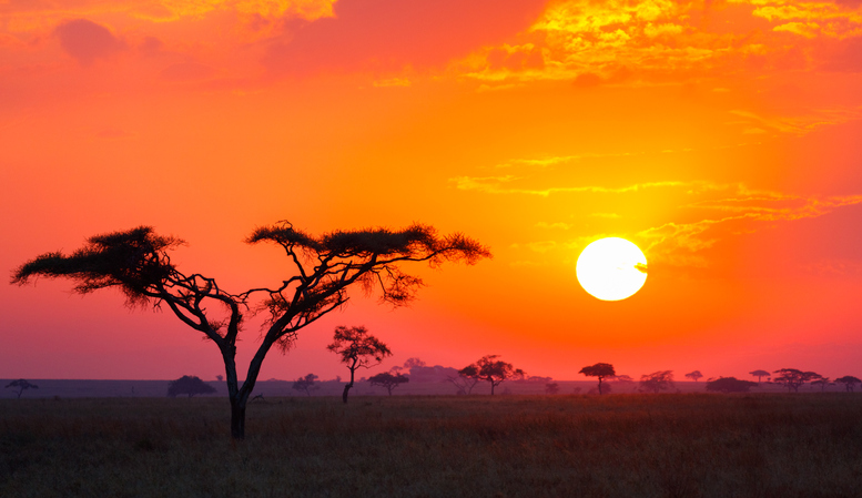 Savanna Sunrise and Acacia Tree in Tanzania Africa