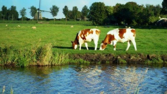 holland 1606601_640
